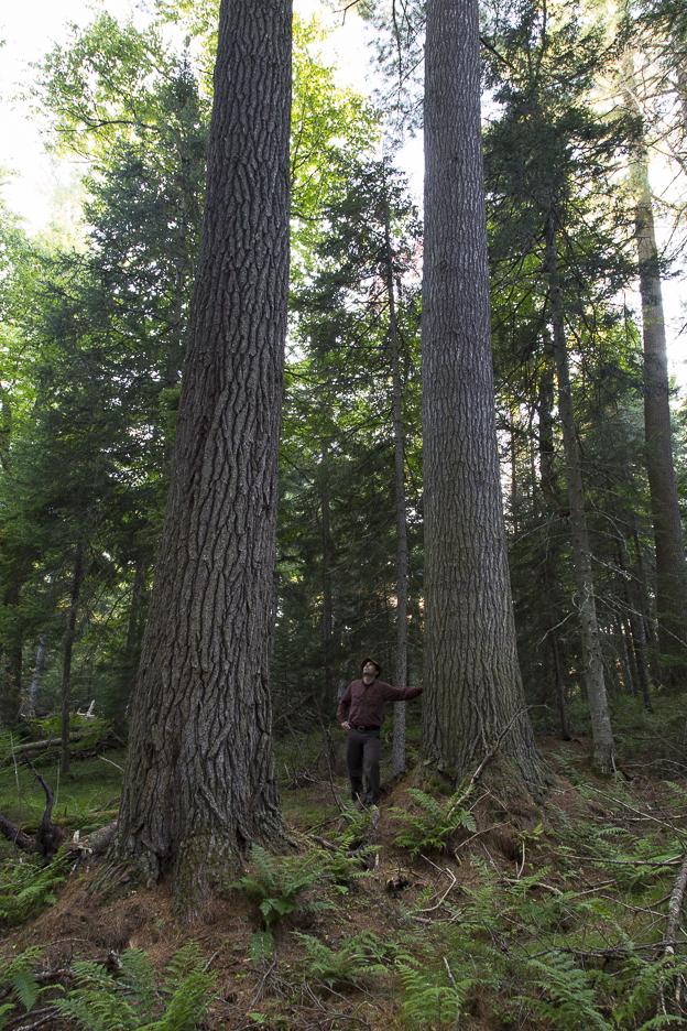 Pine Marten Grove