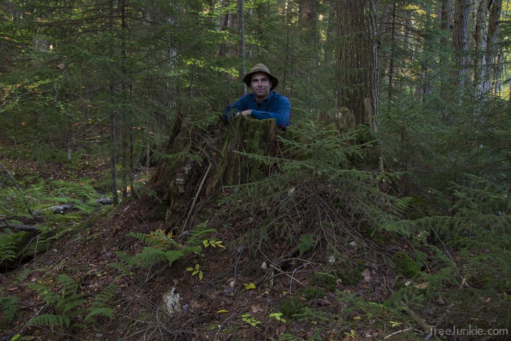 The Veteran Pine