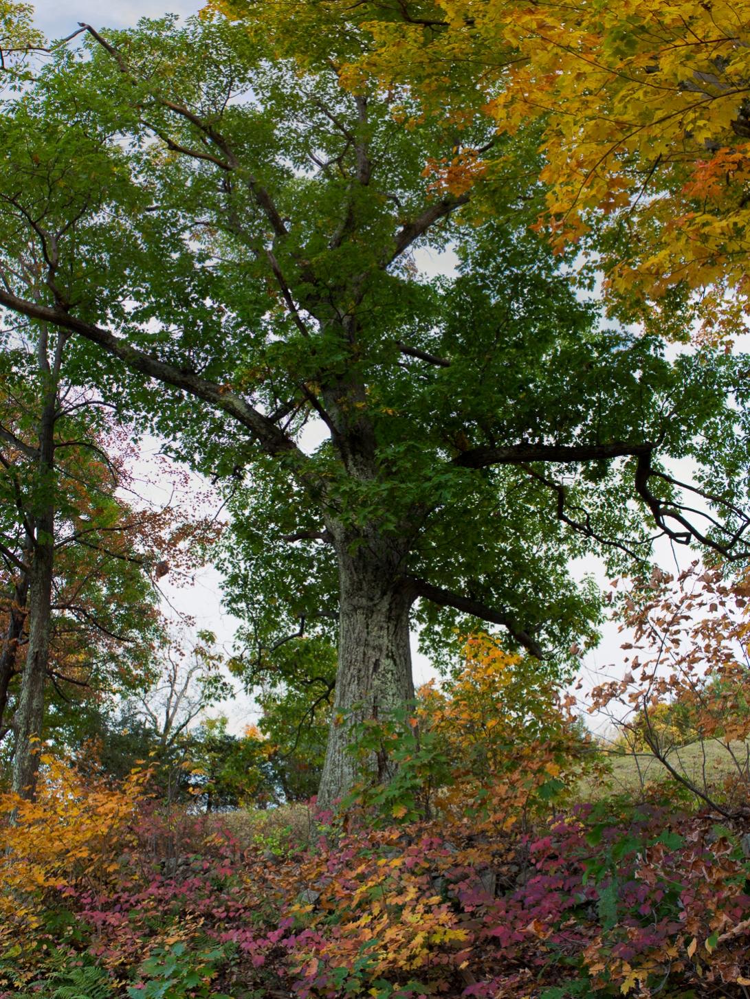 The Upper 27 Knolls Road Red Oak