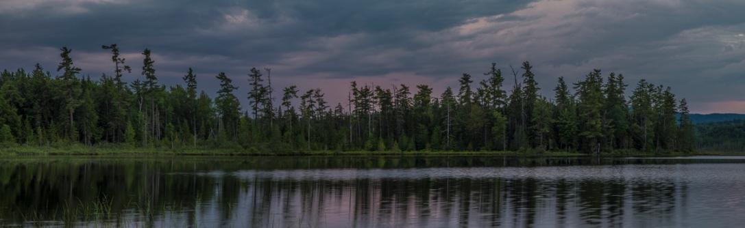 Barnum Pond Pines