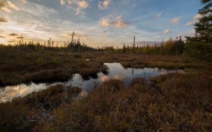Sunset at Bloomingdale Bog