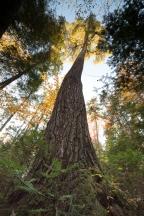 Tree 112