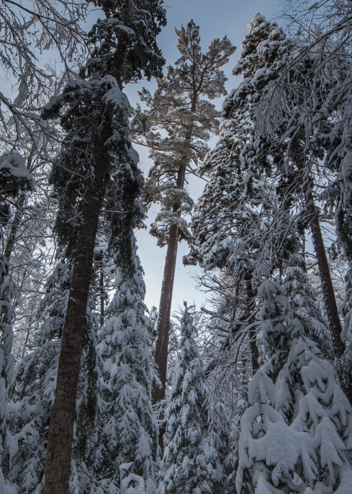 Tree 112 in Winter