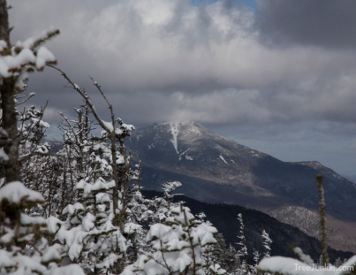 Whiteface From McKenzie