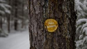Yellow (Ski) Trail Marker