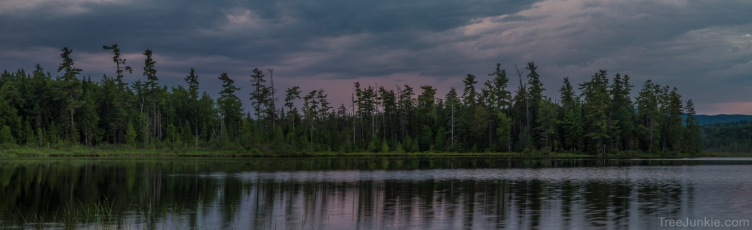 The Pines of Barnum Pond