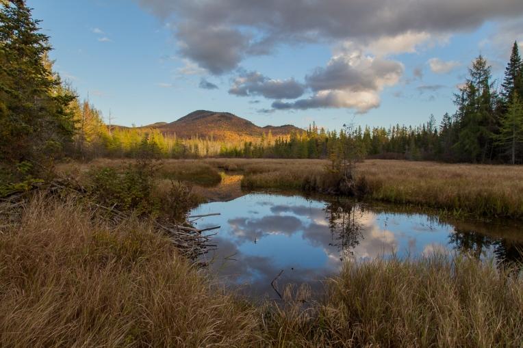 Abandoned Beaver Pond 2015-10-16