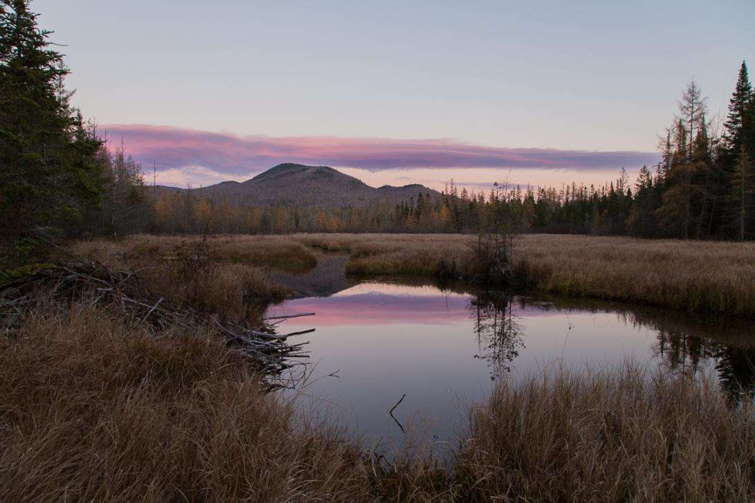 Abandoned Beaver Pond 2015-11-02 1200px