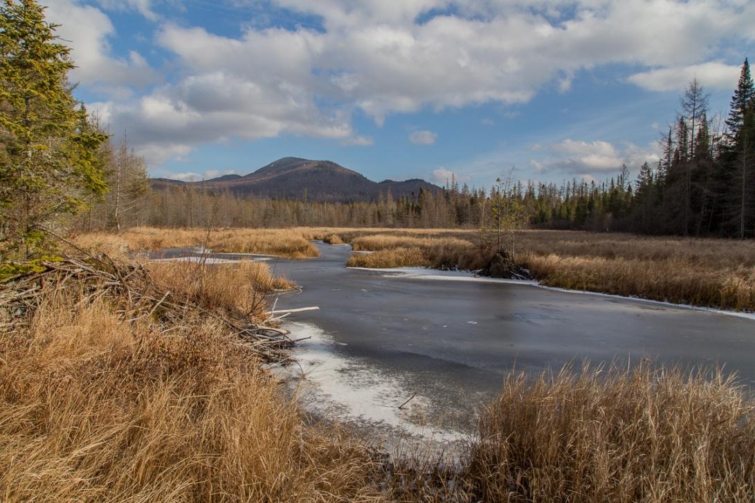Abandoned Beaver Pond 2015-11-25 1200px