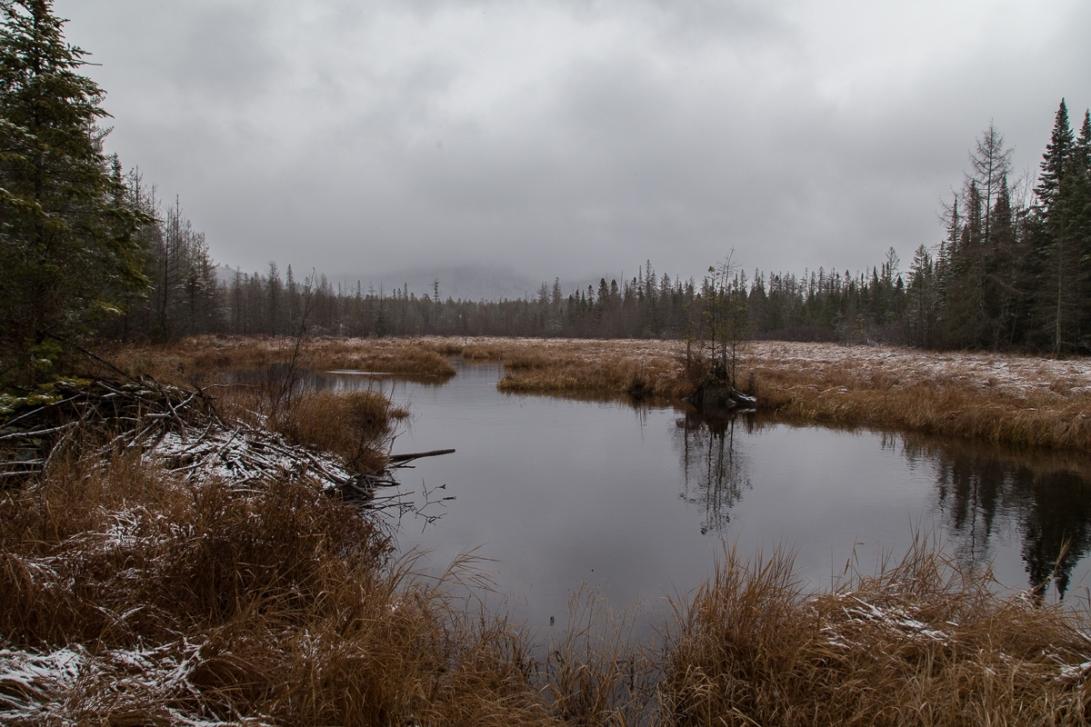Abandoned Beaver Pond 2015-12-03 1200px