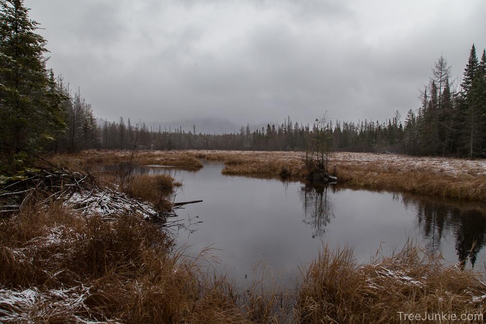 Abandoned Beaver Pond 2015-12-03