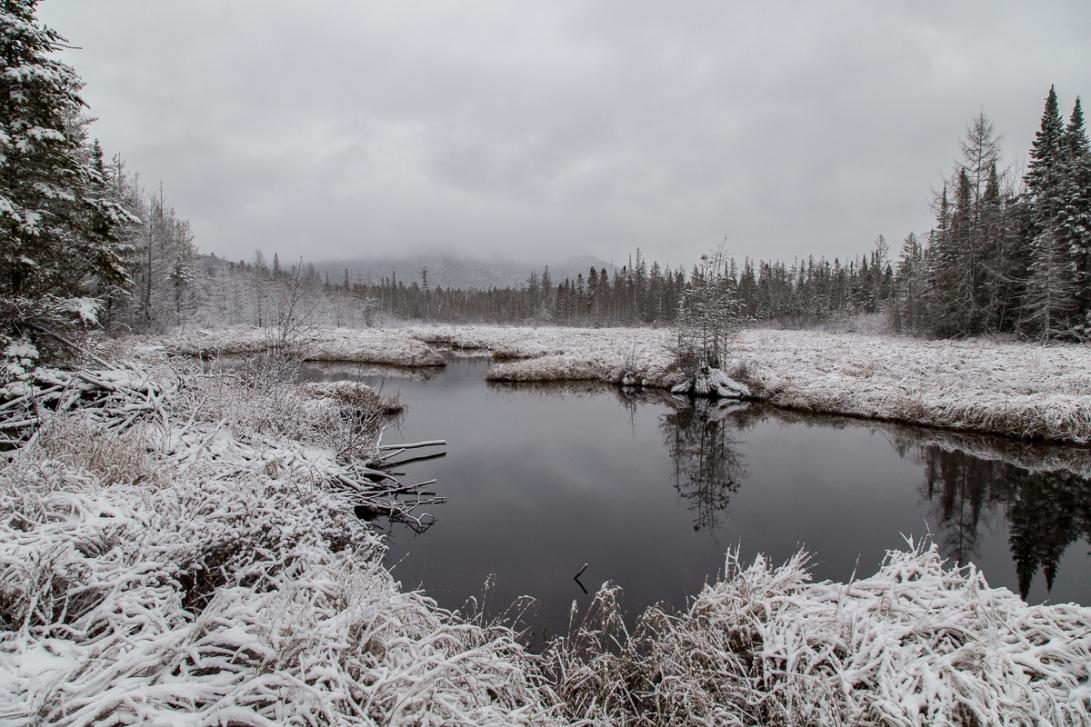 Abandoned Beaver Pond 2015-12-04 1200px