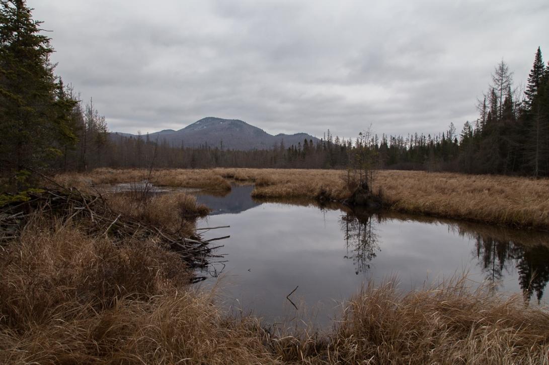 Abandoned Beaver Pond 2015-12-07 1200px