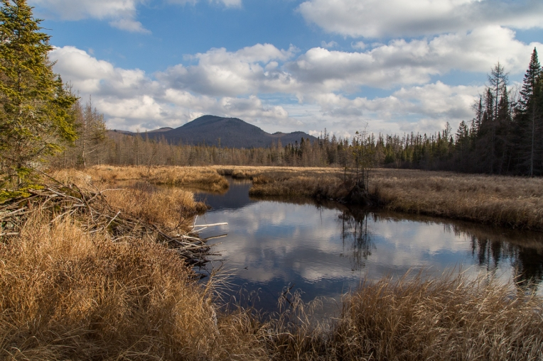 Abandoned Beaver Pond 2015-12-11
