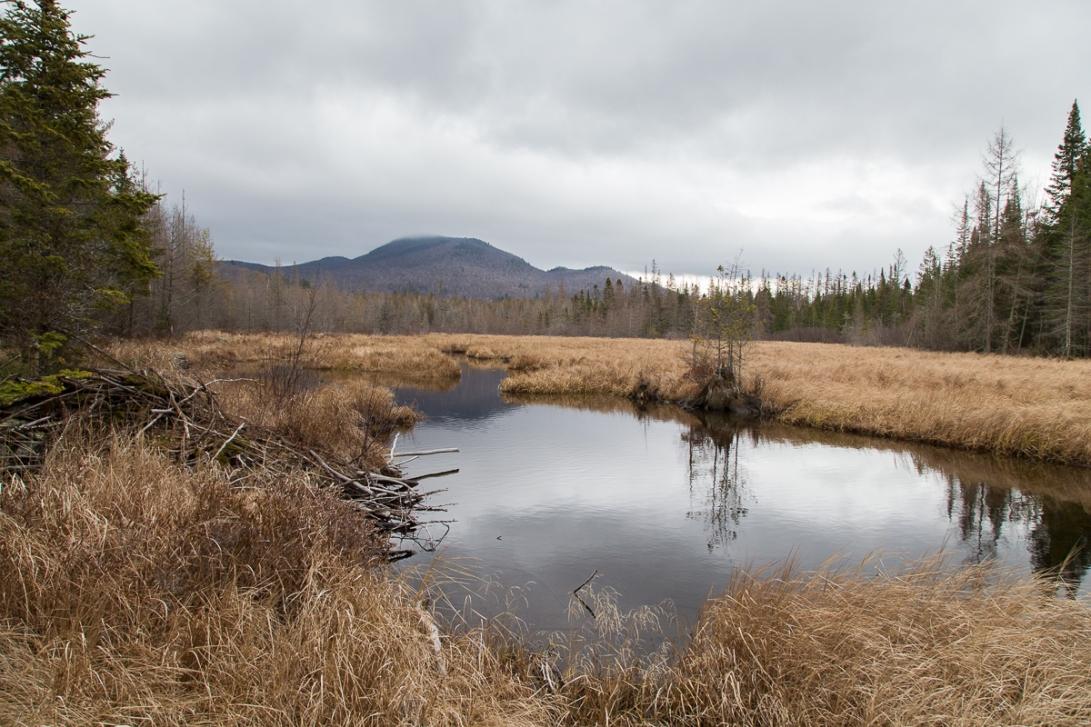 Abandoned Beaver Pond 2015-12-17