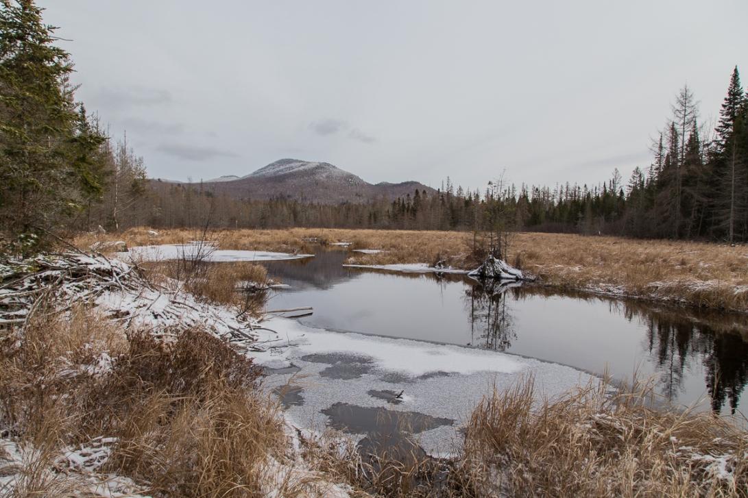 Abandoned Beaver Pond 2015-12-28
