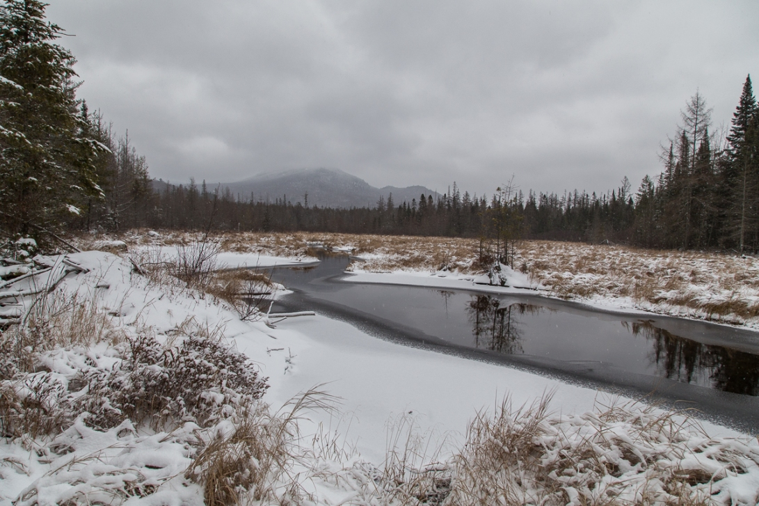 Abandoned Beaver Pond 2016-01-02