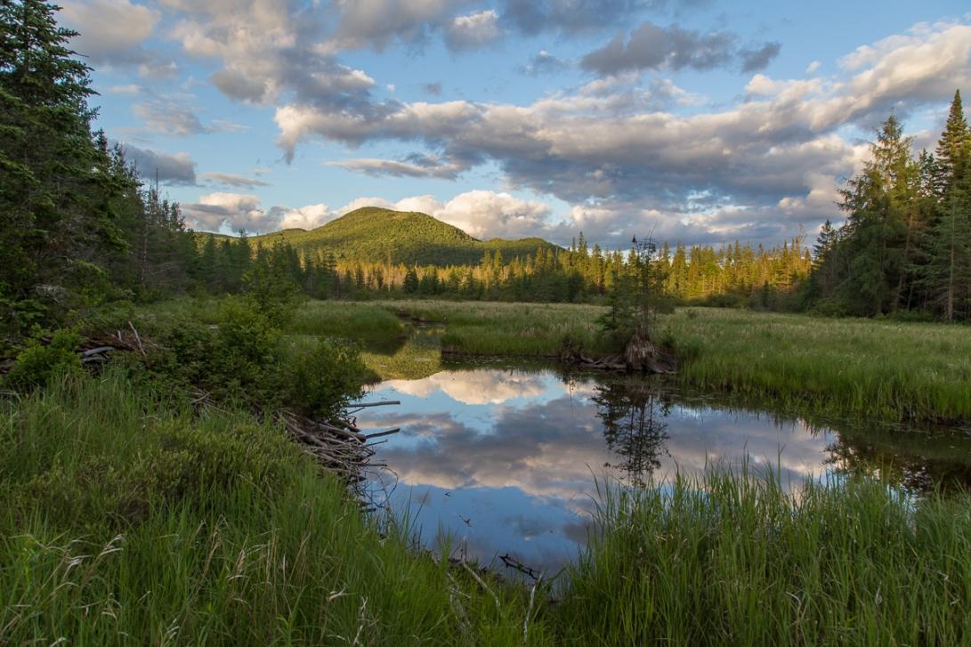 Abandoned Beaver Pond 2016-06-22 1200px